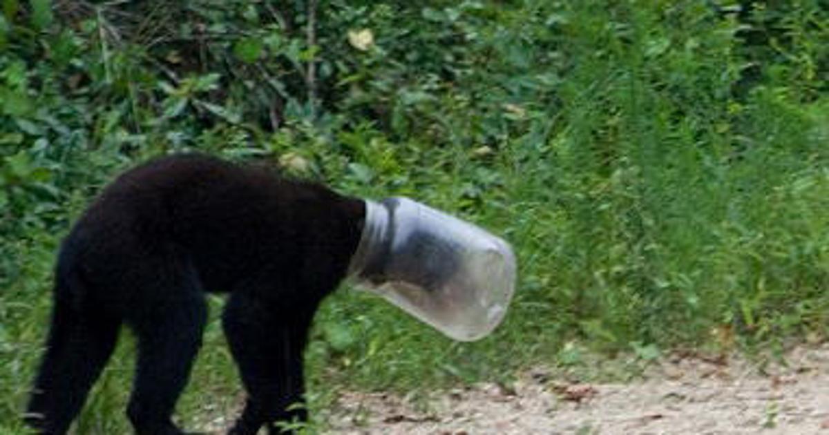 никто фото медведя с бидоном на голове могут расти солнце