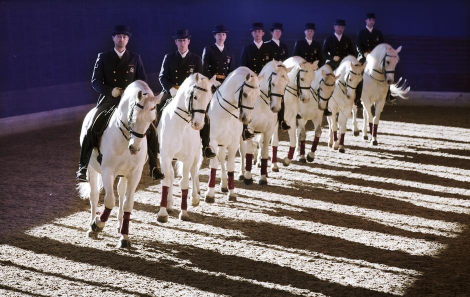 Kobilarna Lipica | Avtor: Kobilarna Lipica