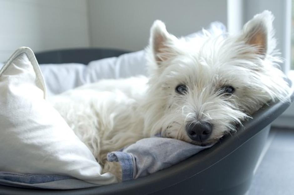 To so pri nas najbolj priljubljene pasme psov   Žurnal24